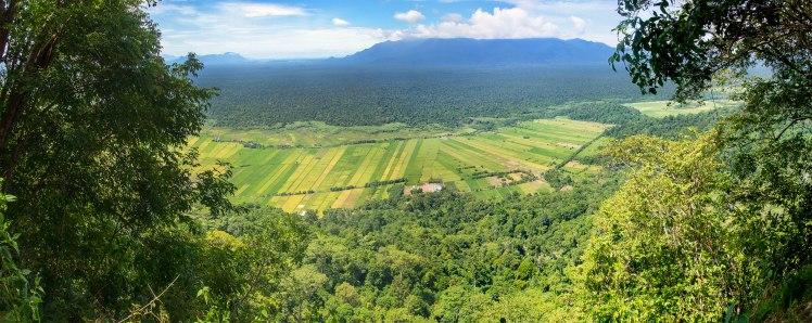 Top of Guning_Borneo_30cm